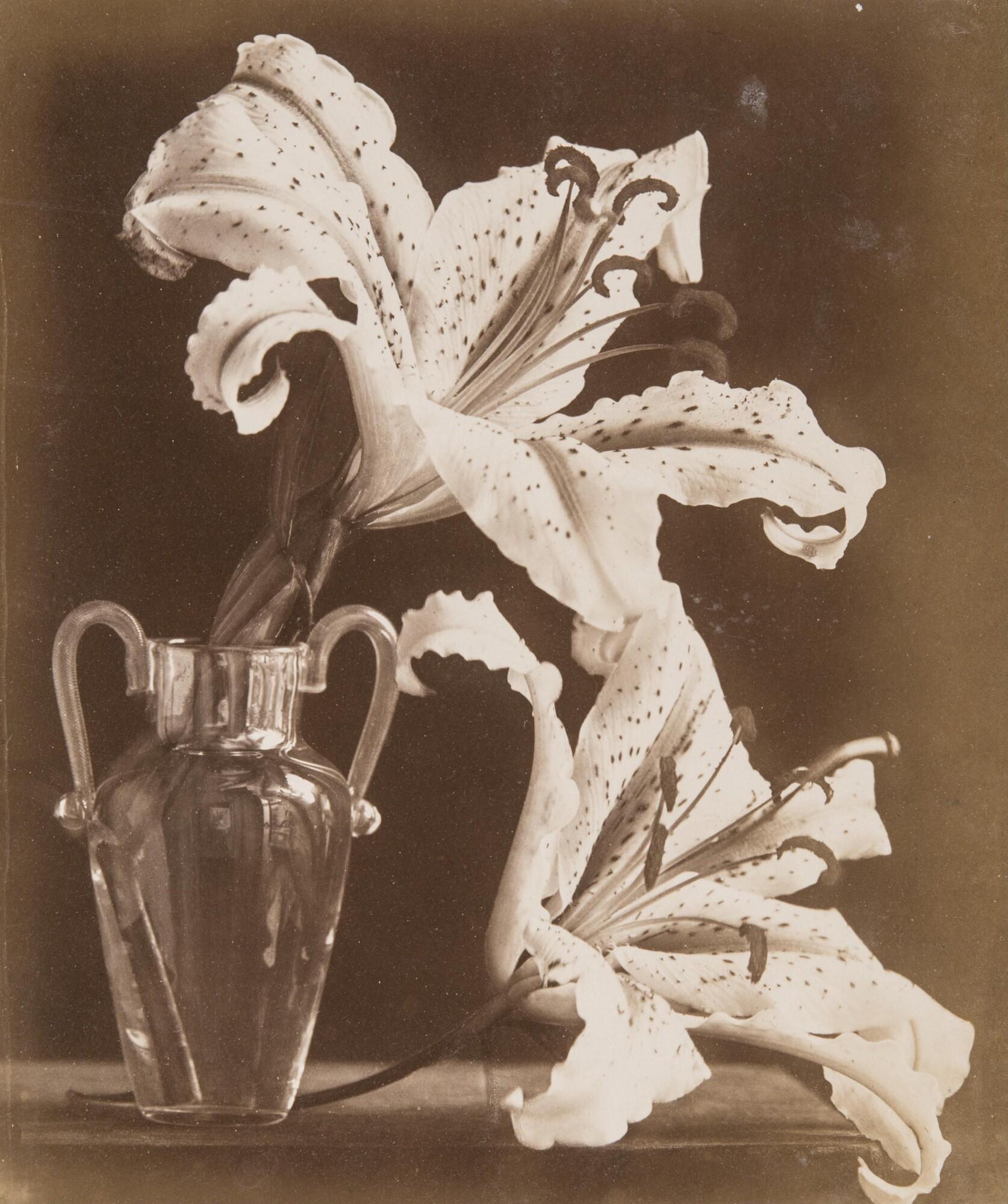 Алинари.    Лилия,1860‑е   Альбуминовый отпечаток