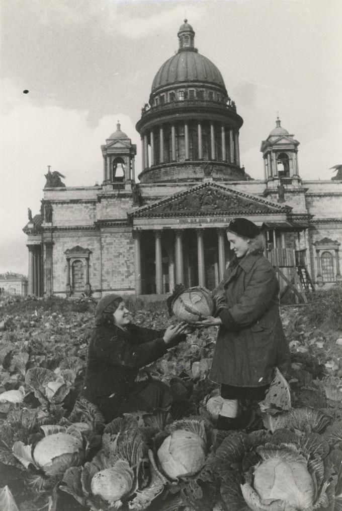 Б. П. Кудояров.    Вместо роз —капуста   Осень 1942